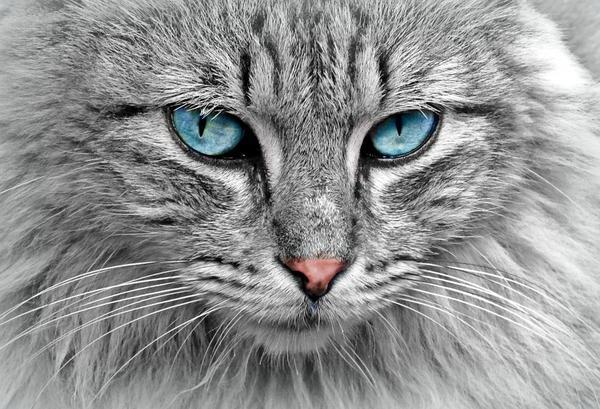 karma dla kota power of nature